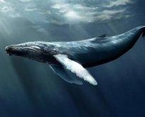 150 gencin intiharında 'mavi balina' şüphesi!