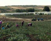 Hazine arazisi nedir? Çiftçi ücretsiz hazine arazisi nasıl alacak?