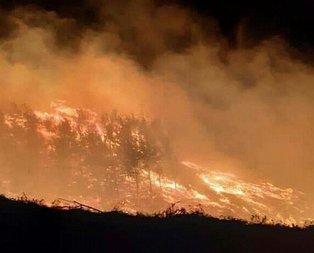 Adana'da orman yangını!