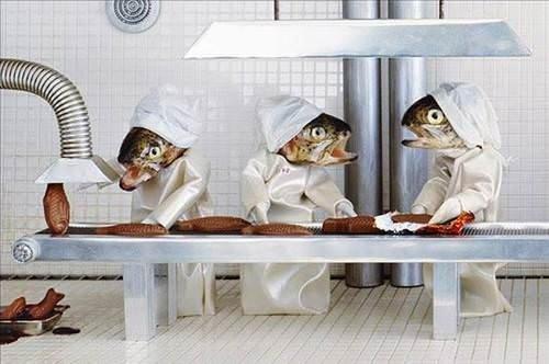 Bu balıklar insan gibi
