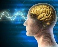 Bilim dünyasında bir ilk! İnsan beyni...