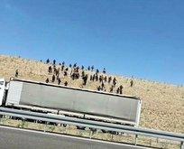 Kaçıyorlardı! 74'ü Niğde'de yakalandı
