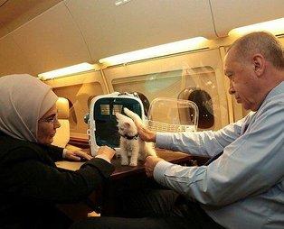 Başkan Erdoğan talimatı verdi Hayvanları Koruma Yasa Teklifi TBMM'ye sunuldu! İşkenceye af yok