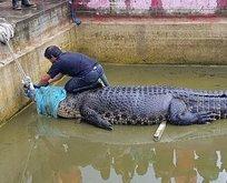 Korkunç! Timah havuza düşen kişiyi parçalayarak öldürdü