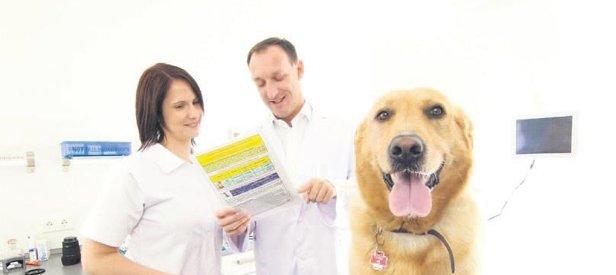 Diyabet köpekleri