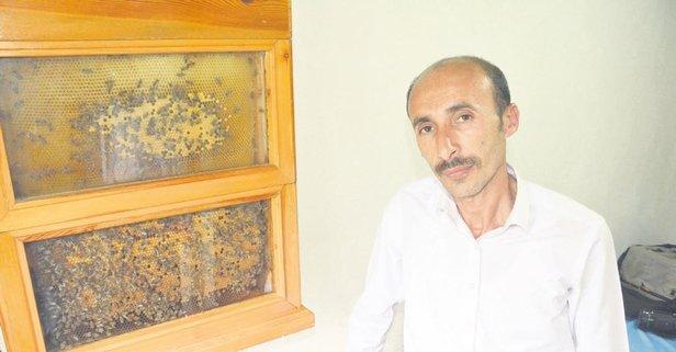 Arılara fısıldayan adam!