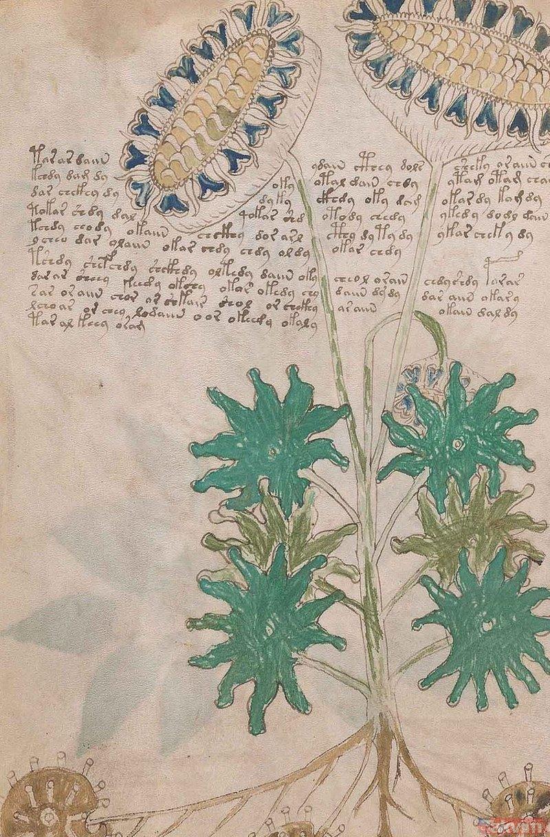 Voynich El Yazması'nın şifreleri çözüldü