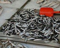 Ana besin: balık!