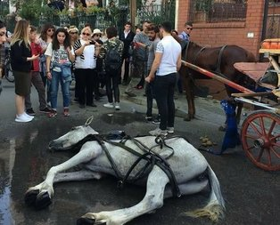 Cumhurbaşkanı: Adalarda atlar faytonda kullanılmayacak