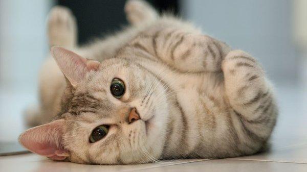 17 şubat Dünya Kediler Günü Kedi Bakımı Nasıl Yapılır