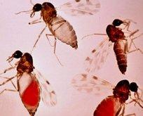 Türkiye'de kör eden sinek tehlikesi! Aşısı bile yok!