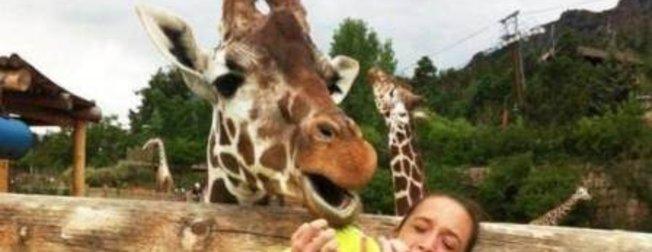 Hayvanların birbirinden komik halleri