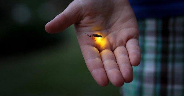 Rüyada Ateşböceği Görmek Ne Anlama Gelir