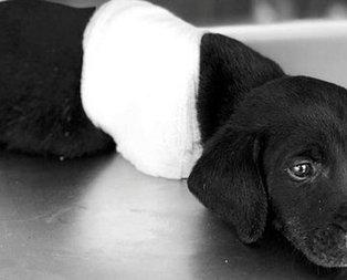 Sakaryada yavru köpeği öldüren kişi tutuklandı