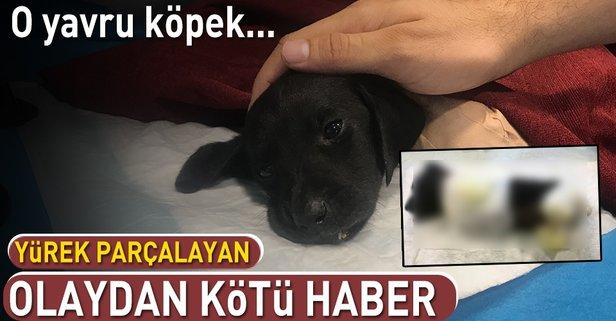 Sapancada Ayağı Kesilmiş Halde Bulunan Yavru Köpek Kurtarılamadı