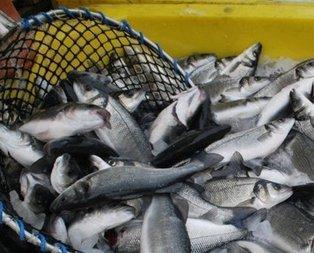 Balığı unutma