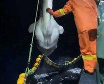 Balıkçılar gözlerine inanamadı!