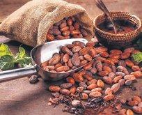 Kilolara kakao