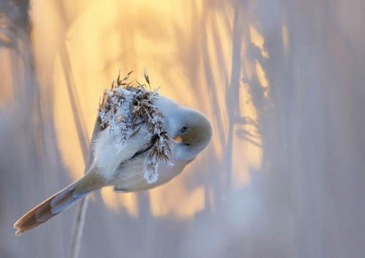 En başarılı doğa fotoğrafları
