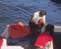 İstanbul'da zehirli midye tehlikesi!