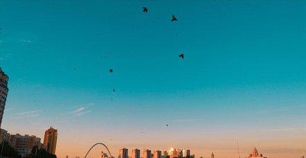 Kuş gribi görülmeyen ülke Kazakistan!