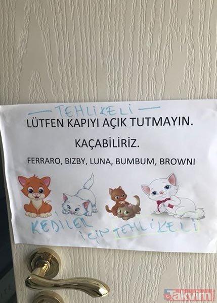 Kediciklerin odası ilk kez görüntülendi
