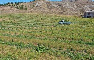 Tam 150 ton hasat edildi