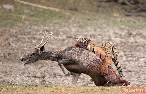Vahşi hayattan ürküten kareler!