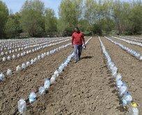 İnternette gördü 3 bin pet şişeyle sera yaptı