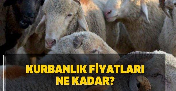 Kurbanlık fiyatları ne kadar? 2020 İstanbul, Ankara, İzmir kurbanlık fiyatları!