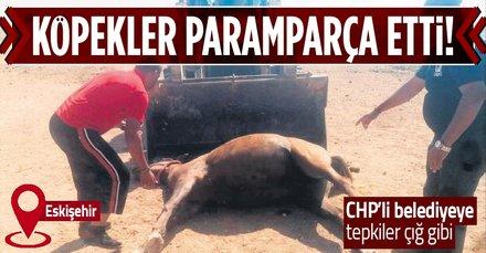 Eskişehir Büyükşehir Belediyesi'ne tepki var! 2 tay köpekler tarafından parçalandı