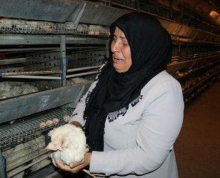 Kahramanmaraş'ta soğutma fanı bozulan çiftlikteki 7 bin 500 tavuk telef oldu