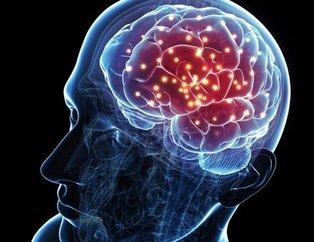 Bu besinler beyni geliştiriyor! İşte beyin gelişiminde rol oynayan besinler...