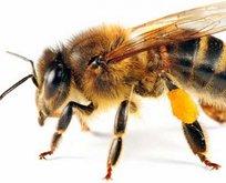 Rüyada arı görmek ne anlama gelir?