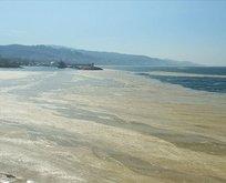 Deniz salyası neden olur? Deniz salyası insana zarar verir mi? Deniz salyası nerelerde var?