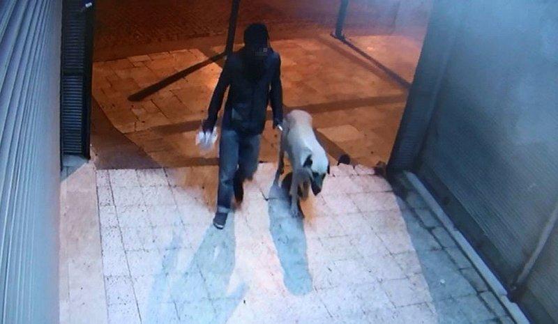 Sokak köpeğini boğarak öldürdükten sonra tecavüz etmiş