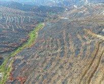 Yangının izleri siliniyor! 50 hektara dikilecek