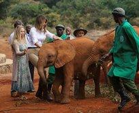 Melania Trump az daha filin altında kalıyordu