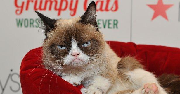 Sosyal medya fenomeni kedi hayatını kaybetti