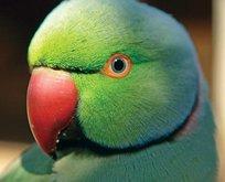Rüyada papağan görmek ne anlama gelir?