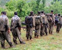 PKK'nın 350 kişilik terör ağı ifşa oldu