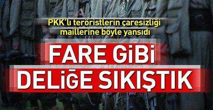 PKK'ya Amanos'ta ağır darbe