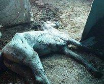 Kayıp atlara kayıt dışı ilaç!