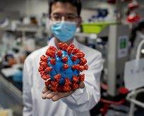 Koronavirüs ile ilgili şoke eden gerçek!