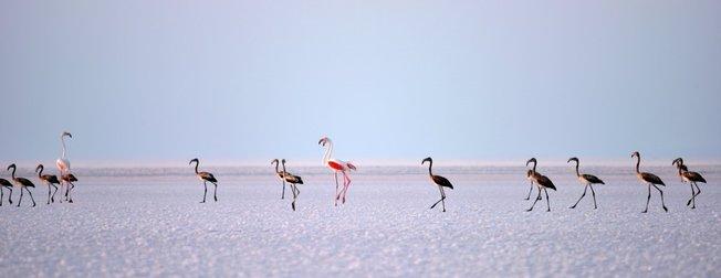 Tuz Gölü 'kuş cenneti' turistlerin akınına uğruyor