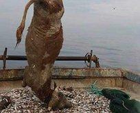 Balıkçılar şok oldu! Denizden öyle bir şey çıktı ki...