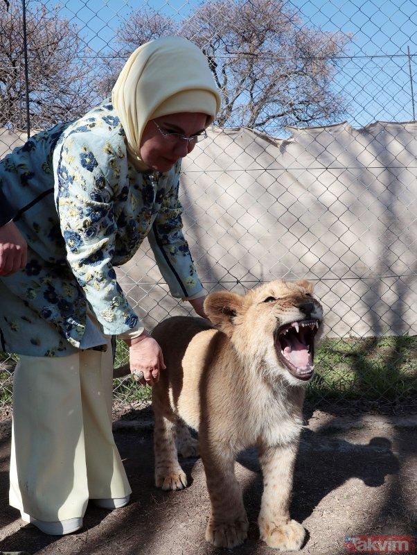Emine Erdoğan Güney Afrikada yavru aslan sevdi