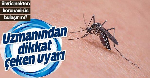 Sivrisinek korona bulaştırır mı?