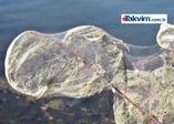 Yunanistanın Aitoliko kasabası örümcek ağlarıyla kaplandı
