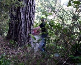Kocaman ağaçtan bakın ne yaptı! İnanamayacaksınız